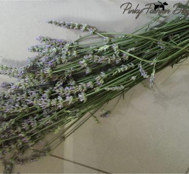 priljubljena rastlina SIVKA 🌱 je nepogrešljiv opojni vonj po domovih...