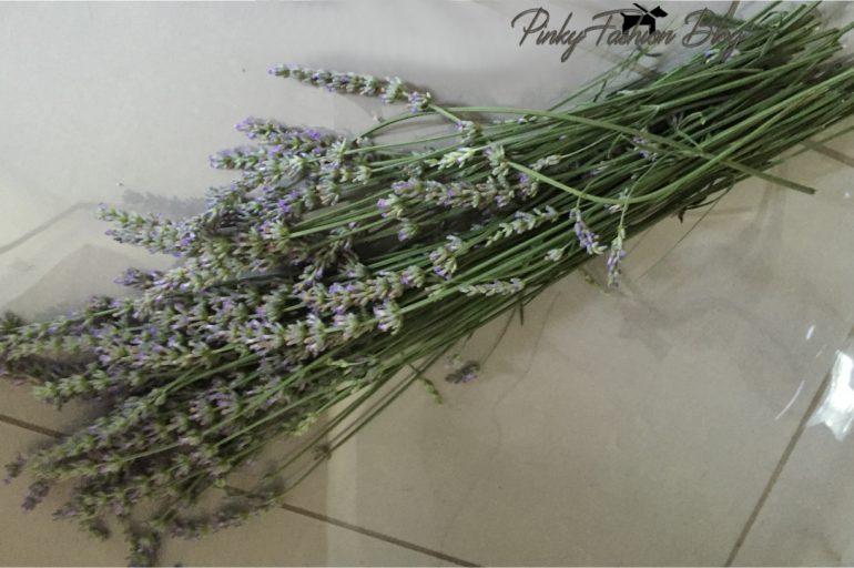 priljubljena rastlina SIVKA 🌱 je nepogrešljiv opojni vonj po domovih…